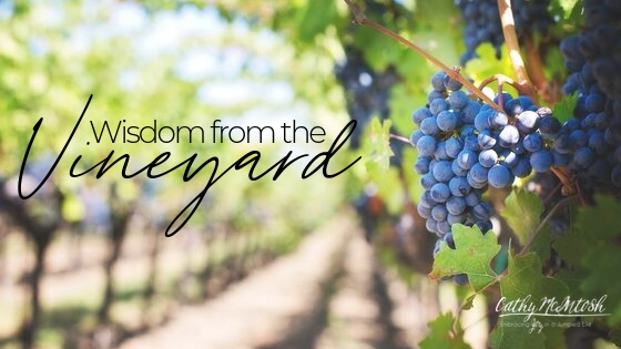Wisdom From the Vineyard